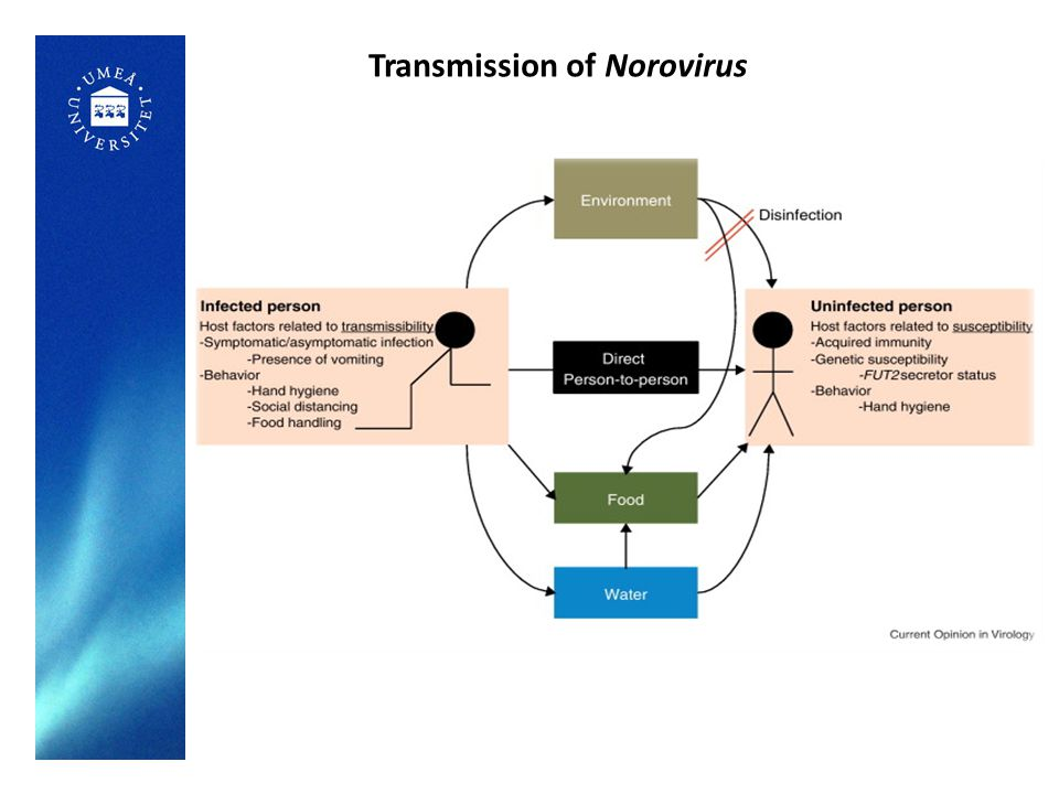 Transmission of Norovirus