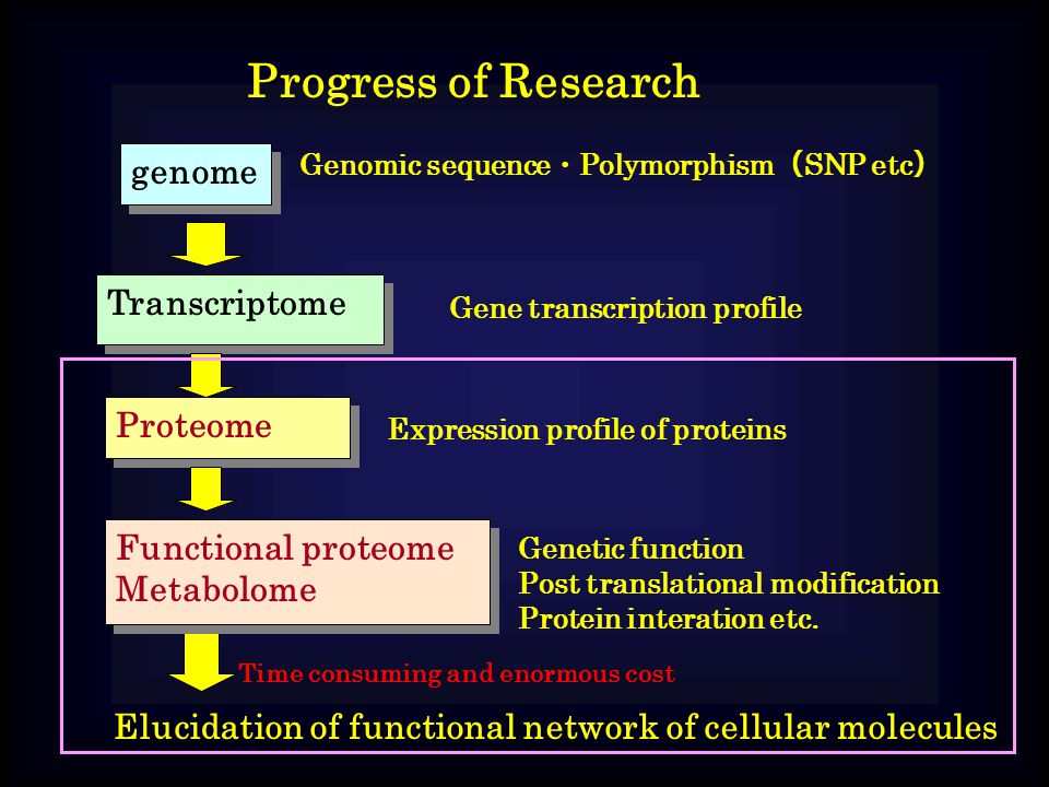 Progress of Research genome Genomic sequence ・ Polymorphism ( SNP etc ) Transcriptome Gene transcription profile Proteome Expression profile of proteins Functional proteome Metabolome Functional proteome Metabolome Genetic function Post translational modification Protein interation etc.