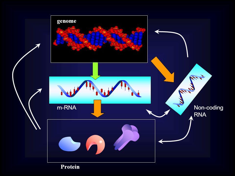 genome m-RNA Protein Non-coding RNA