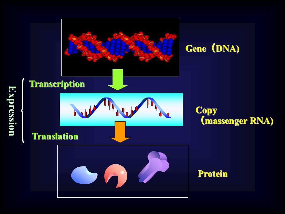 Transcription Gene ( DNA) Copy ( massenger RNA) Protein Translation Expression