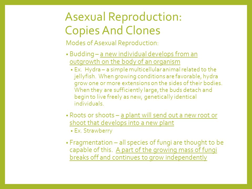 Asexual Reproduction: Copies And Clones Modes of Asexual Reproduction: Budding – a new individual develops from an outgrowth on the body of an organis