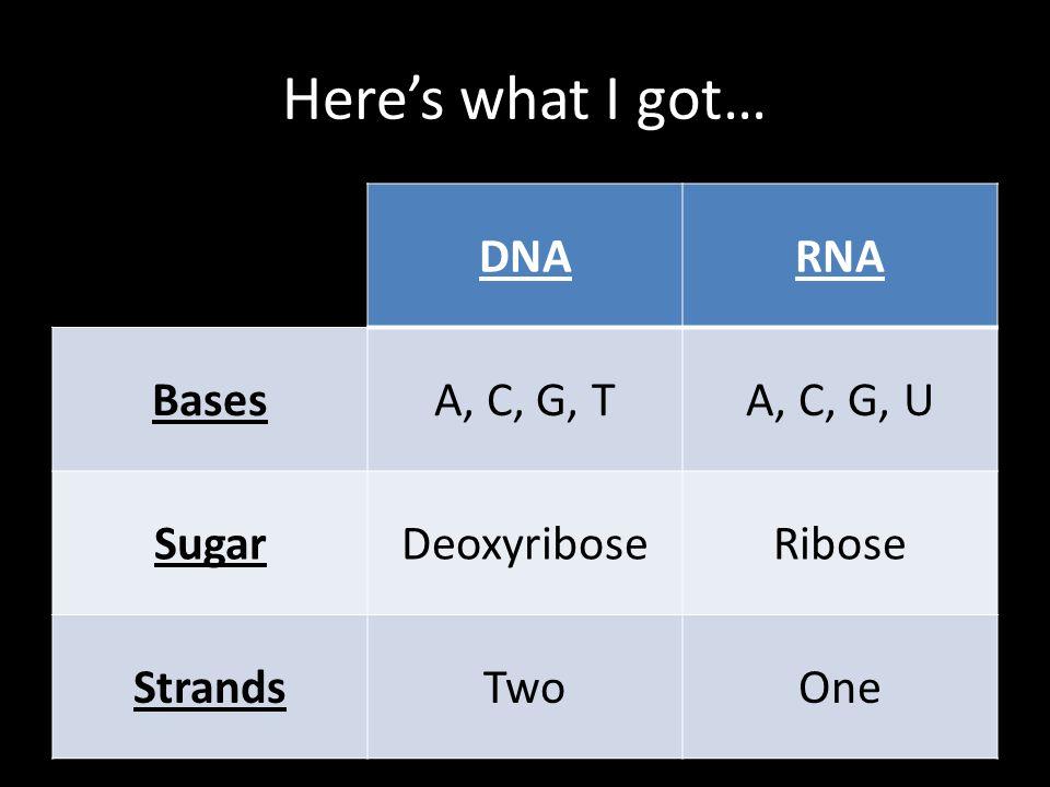 Here's what I got… DNARNA BasesA, C, G, TA, C, G, U SugarDeoxyriboseRibose StrandsTwoOne
