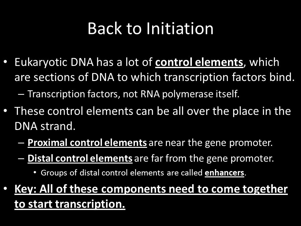 Back to Initiation Eukaryotic DNA has a lot of control elements, which are sections of DNA to which transcription factors bind.