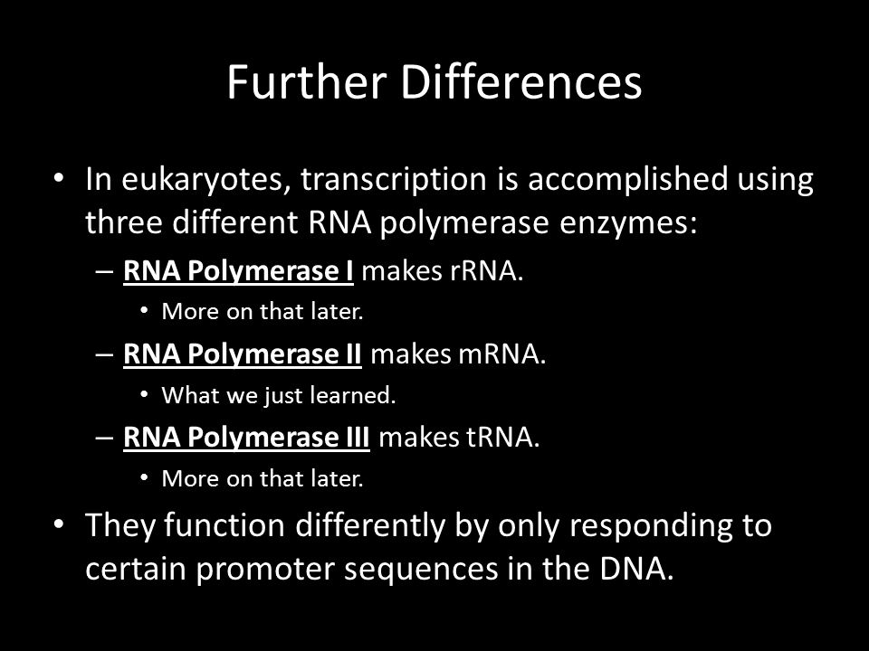 Further Differences In eukaryotes, transcription is accomplished using three different RNA polymerase enzymes: – RNA Polymerase I makes rRNA.