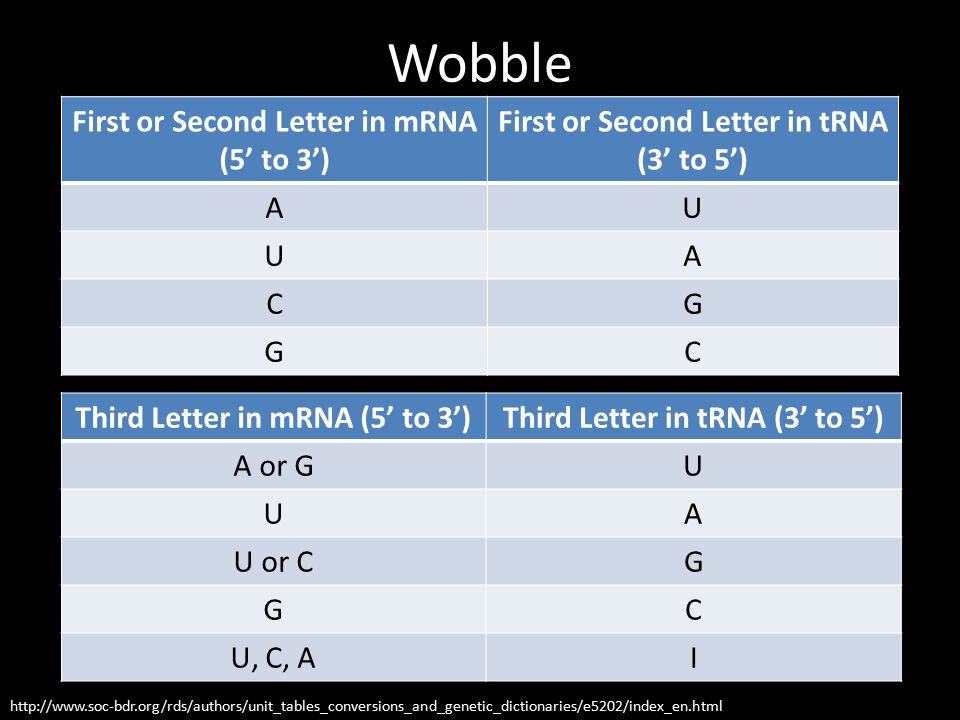 Wobble http://www.soc-bdr.org/rds/authors/unit_tables_conversions_and_genetic_dictionaries/e5202/index_en.html First or Second Letter in mRNA (5' to 3') First or Second Letter in tRNA (3' to 5') AU UA CG GC Third Letter in mRNA (5' to 3')Third Letter in tRNA (3' to 5') A or GU UA U or CG GC U, C, AI