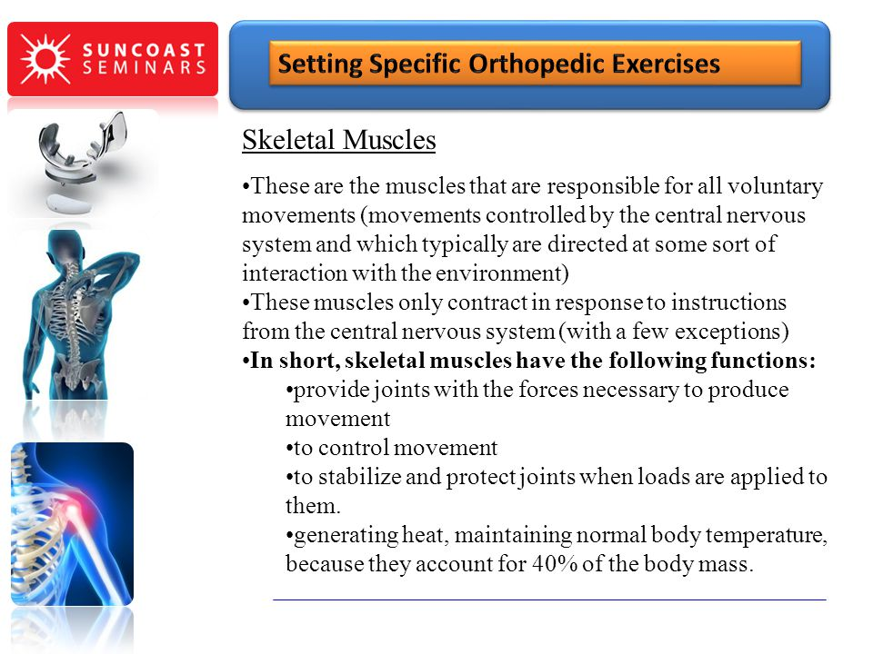 SunCoast Seminars Skeletal Muscles These are the muscles that are responsible for all voluntary movements (movements controlled by the central nervous