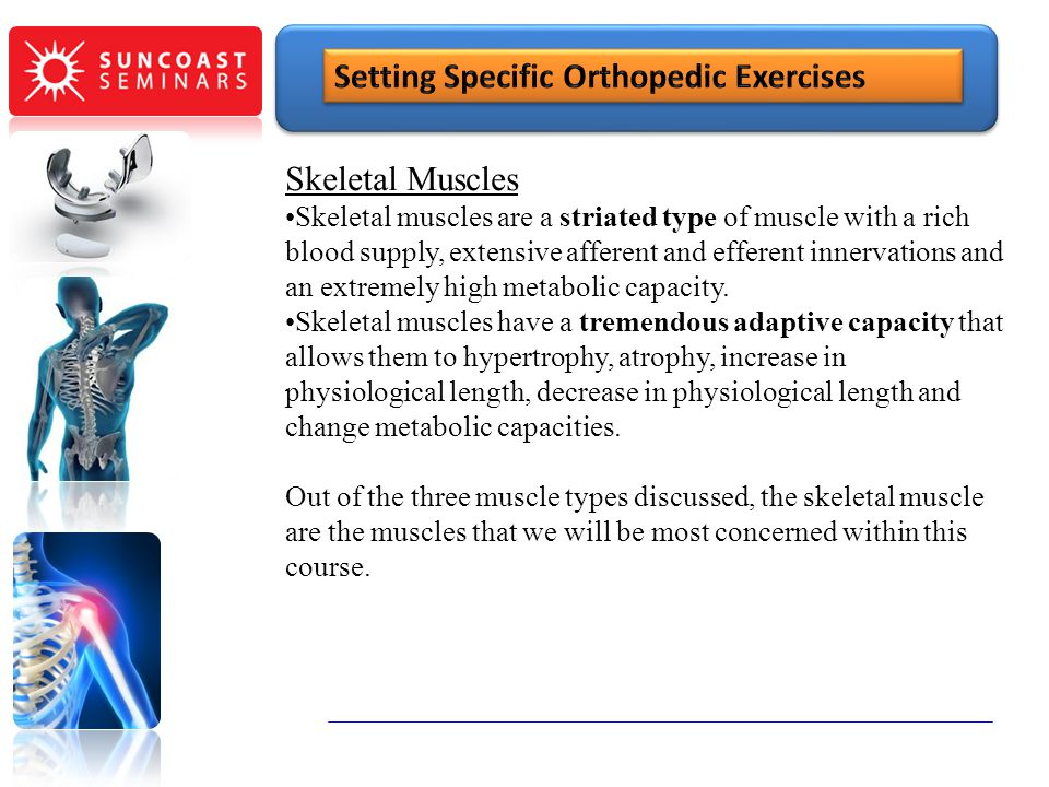 Skeletal Muscles Skeletal muscles are a striated type of muscle with a rich blood supply, extensive afferent and efferent innervations and an extremel