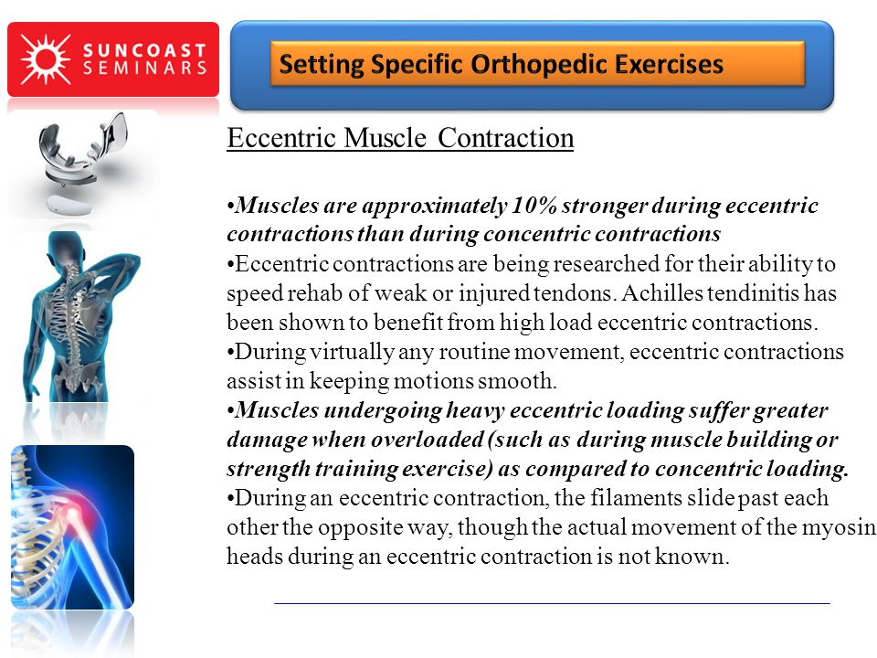 Eccentric Muscle Contraction Muscles are approximately 10% stronger during eccentric contractions than during concentric contractions Eccentric contra