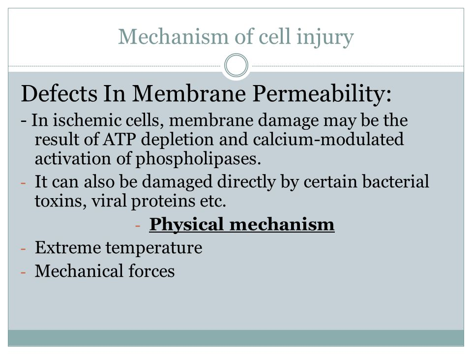 Mechanism of cell injury Defects In Membrane Permeability: - In ischemic cells, membrane damage may be the result of ATP depletion and calcium-modulated activation of phospholipases.