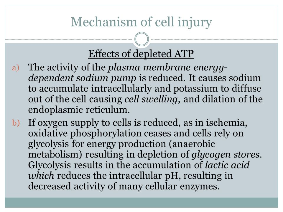 Mechanism of cell injury Effects of depleted ATP a) The activity of the plasma membrane energy- dependent sodium pump is reduced.