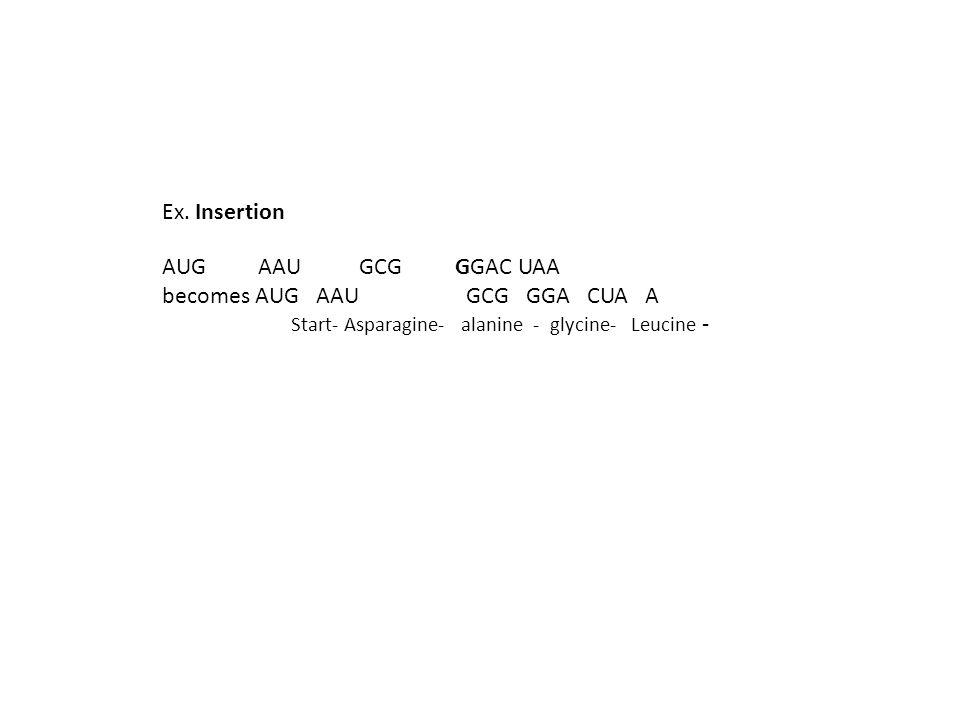 Ex. Insertion AUG AAU GCG GGAC UAA becomes AUG AAU GCG GGA CUA A Start- Asparagine- alanine - glycine- Leucine -