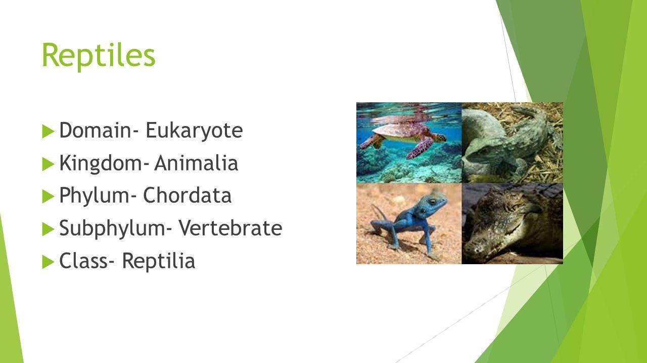 Reptiles  Domain- Eukaryote  Kingdom- Animalia  Phylum- Chordata  Subphylum- Vertebrate  Class- Reptilia