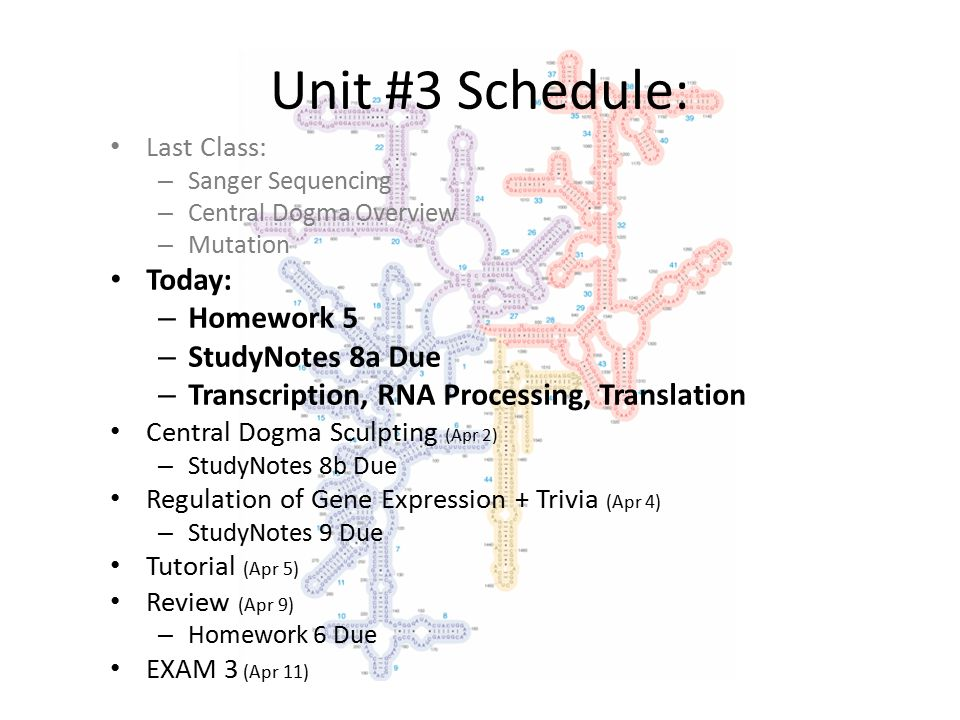 Unit #3 Schedule: Last Class: – Sanger Sequencing – Central Dogma Overview – Mutation Today: – Homework 5 – StudyNotes 8a Due – Transcription, RNA Processing, Translation Central Dogma Sculpting (Apr 2) – StudyNotes 8b Due Regulation of Gene Expression + Trivia (Apr 4) – StudyNotes 9 Due Tutorial (Apr 5) Review (Apr 9) – Homework 6 Due EXAM 3 (Apr 11)