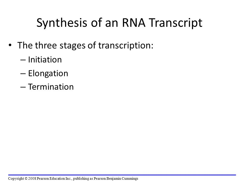 Synthesis of an RNA Transcript The three stages of transcription: – Initiation – Elongation – Termination Copyright © 2008 Pearson Education Inc., publishing as Pearson Benjamin Cummings