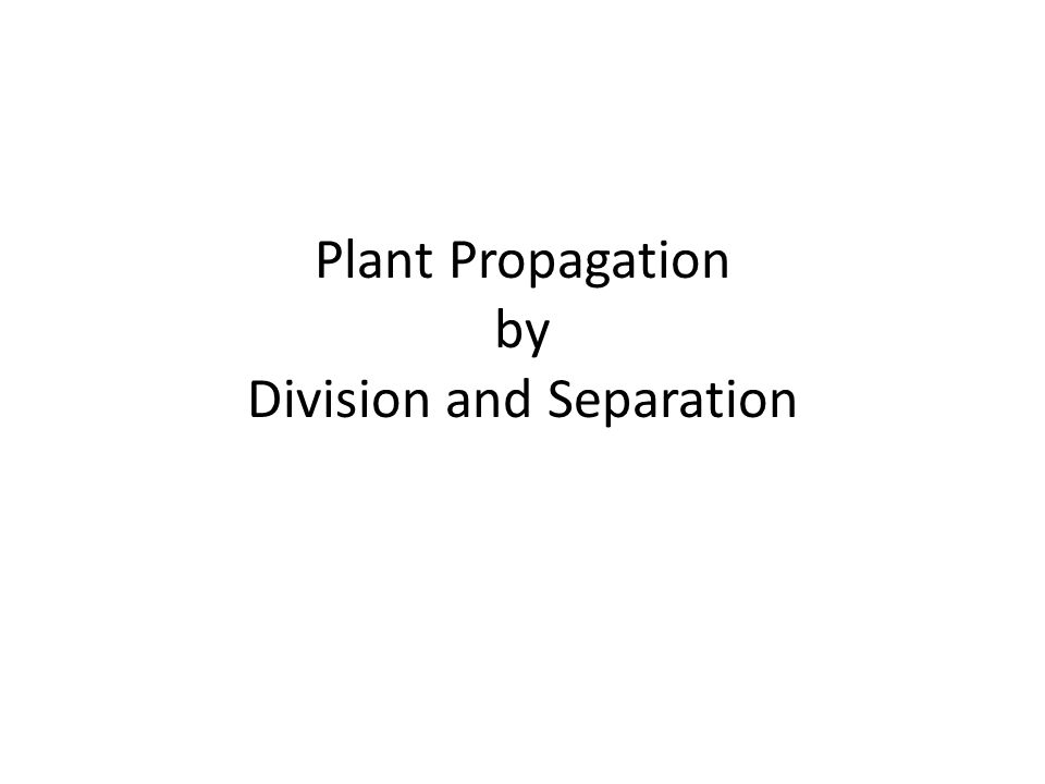 Plant Propagation by Division and Separation