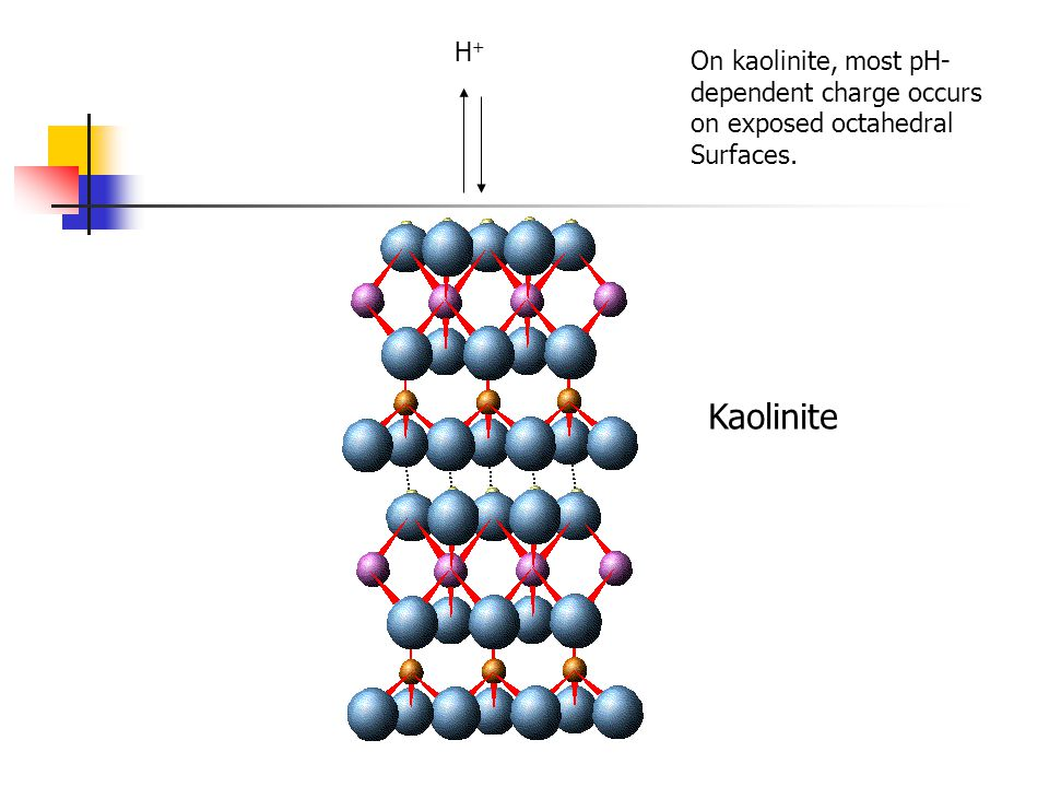 Kaolinite H+H+ On kaolinite, most pH- dependent charge occurs on exposed octahedral Surfaces.