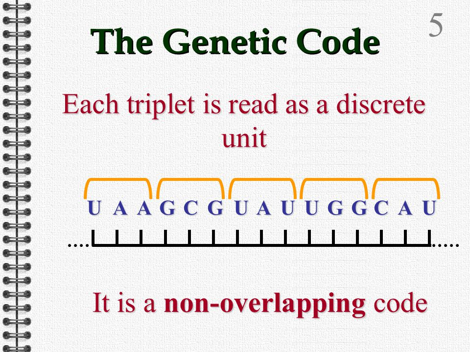4 The code is read in Triplets Triplets of bases This gives 64 combinations of the 4 bases UAAGCGUAUUGGCAUUAAGCGUAUUGGCAUUAAGCGUAUUGGCAUUAAGCGUAUUGGCAU