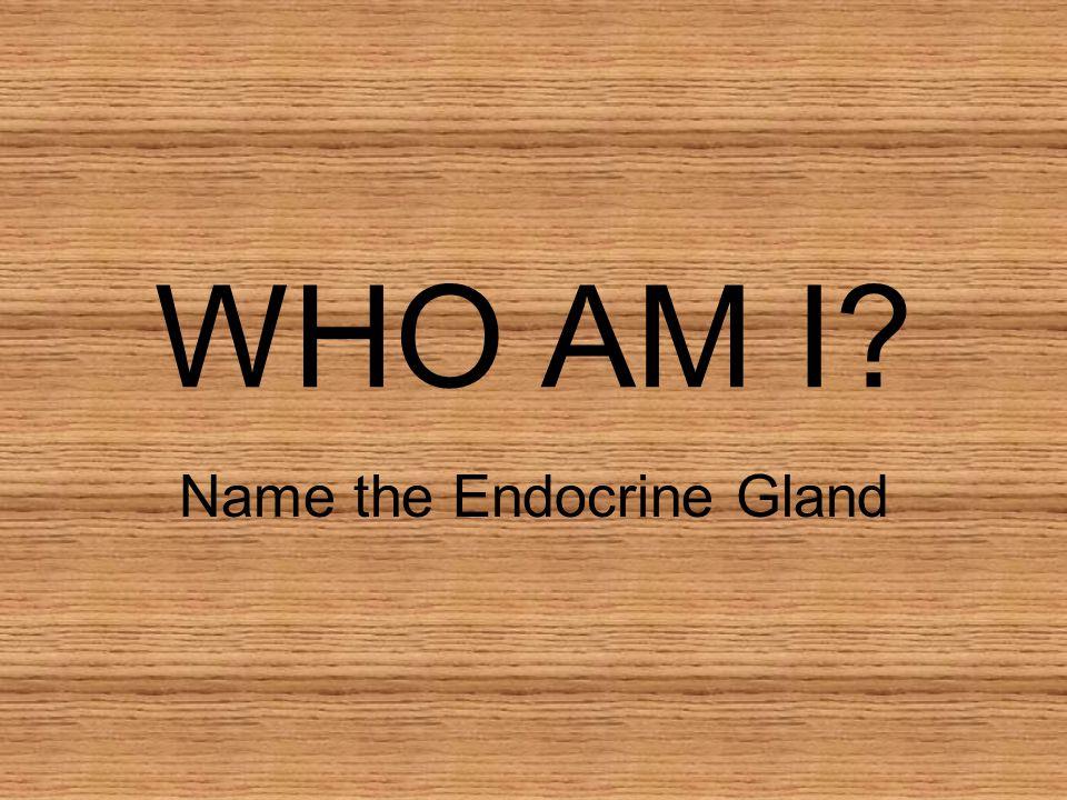 WHO AM I? Name the Endocrine Gland