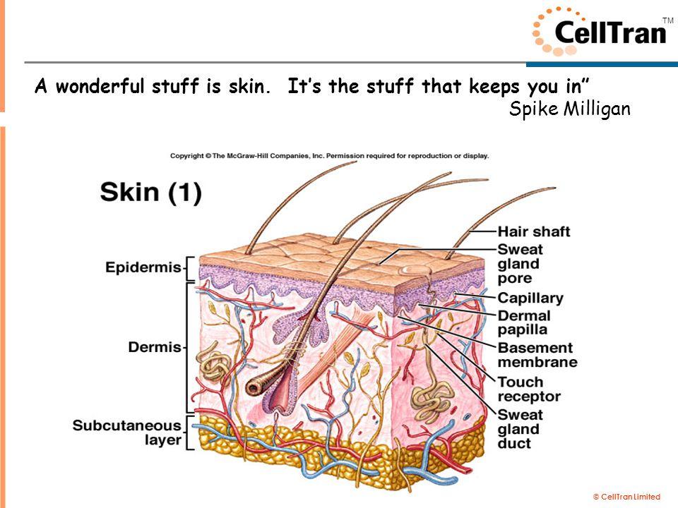 "© CellTran Limited TM A wonderful stuff is skin. It's the stuff that keeps you in"" Spike Milligan"