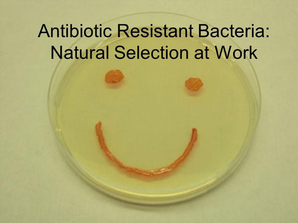 Antibiotic Resistant Bacteria: Natural Selection at Work