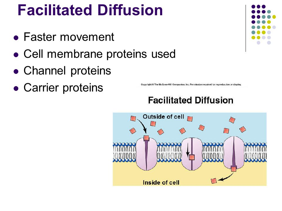 Facilitated Diffusion Faster movement Cell membrane proteins used Channel proteins Carrier proteins