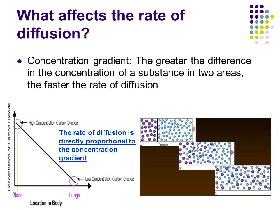 What affects the rate of diffusion.