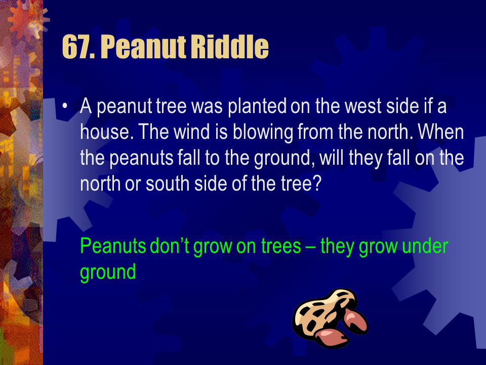 67. Peanut Riddle A peanut tree was planted on the west side if a house. The wind is blowing from the north. When the peanuts fall to the ground, will
