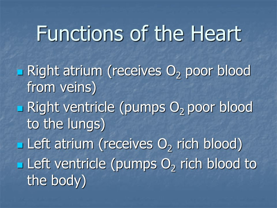 Functions of the Heart Right atrium (receives O 2 poor blood from veins) Right atrium (receives O 2 poor blood from veins) Right ventricle (pumps O 2 poor blood to the lungs) Right ventricle (pumps O 2 poor blood to the lungs) Left atrium (receives O 2 rich blood) Left atrium (receives O 2 rich blood) Left ventricle (pumps O 2 rich blood to the body) Left ventricle (pumps O 2 rich blood to the body)