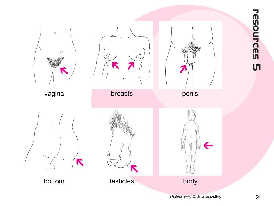 59 bottomtesticlesbody vaginabreastspenis