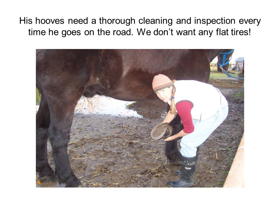 His hooves need a thorough cleaning and inspection every time he goes on the road.