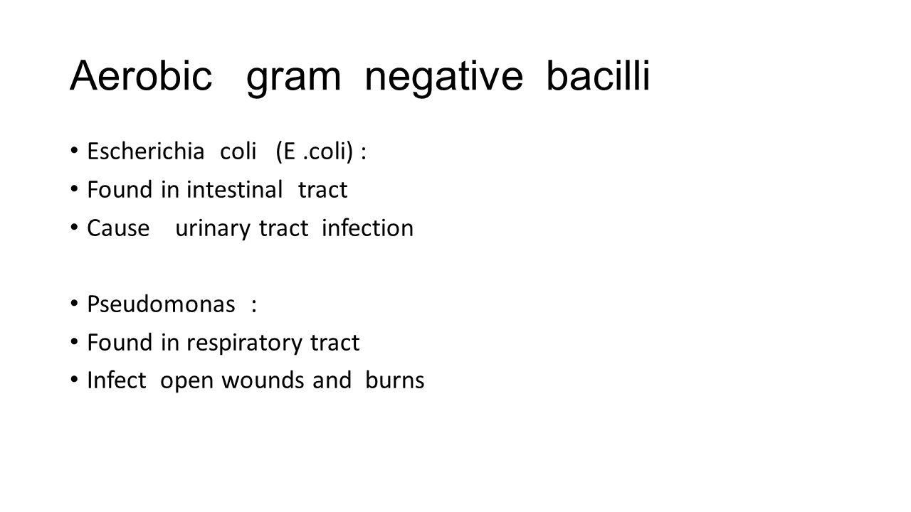 Aerobic gram negative bacilli Escherichia coli (E.coli) : Found in intestinal tract Cause urinary tract infection Pseudomonas : Found in respiratory t