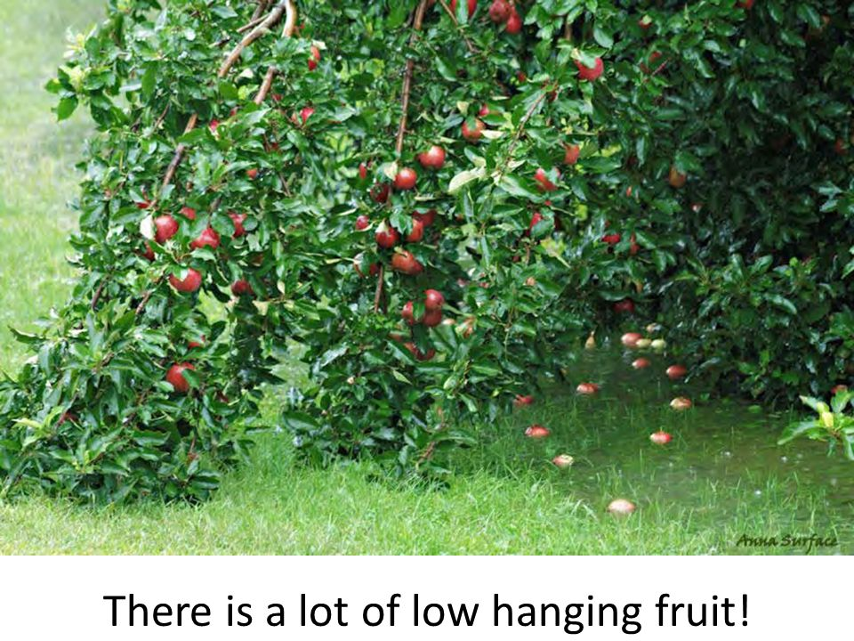 There is a lot of low hanging fruit!