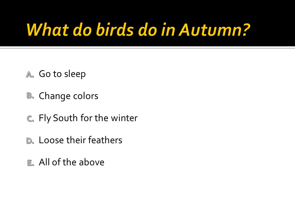 All of the above Loose their feathers Go to sleep Change colors Fly South for the winter