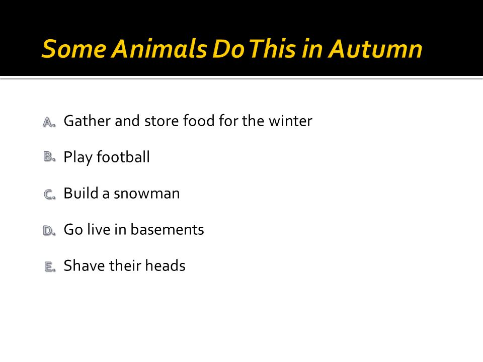 Shave their heads Go live in basements Build a snowman Play football Gather and store food for the winter