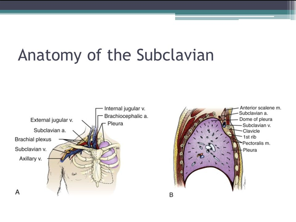 Anatomy of the Subclavian