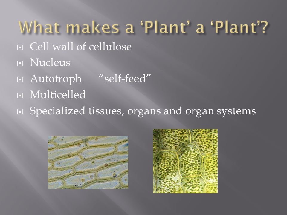  Cell wall of cellulose  Nucleus  Autotroph self-feed  Multicelled  Specialized tissues, organs and organ systems
