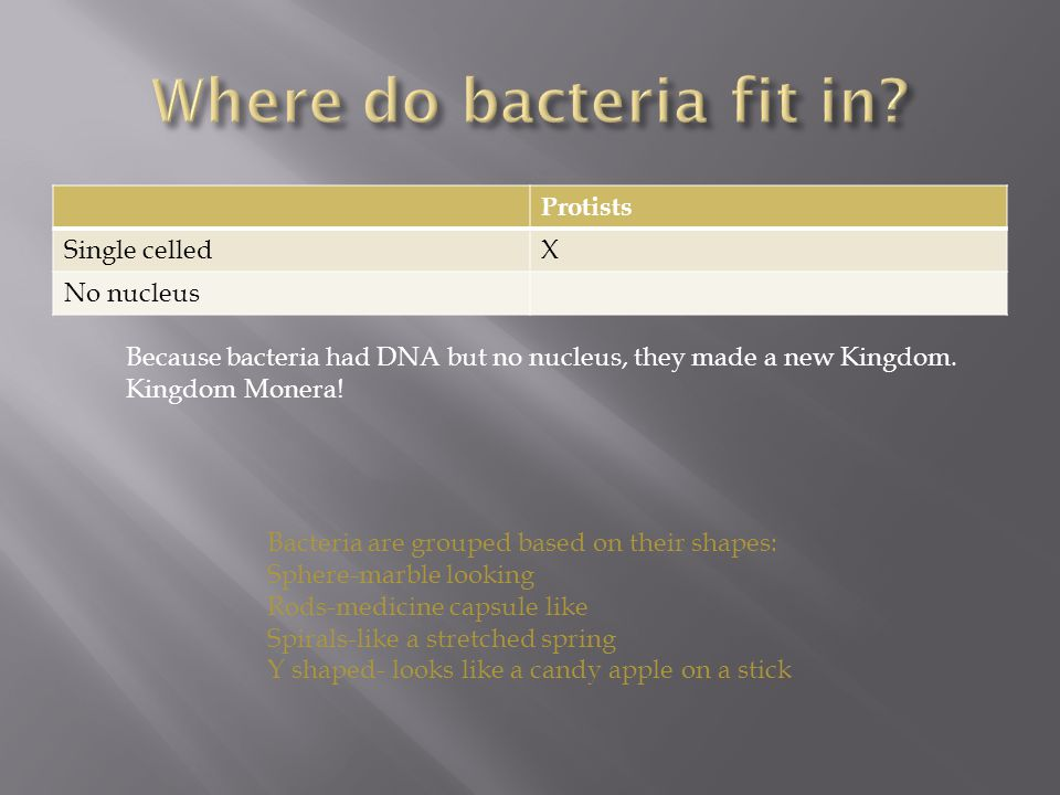 Protists Single celledX No nucleus Because bacteria had DNA but no nucleus, they made a new Kingdom.