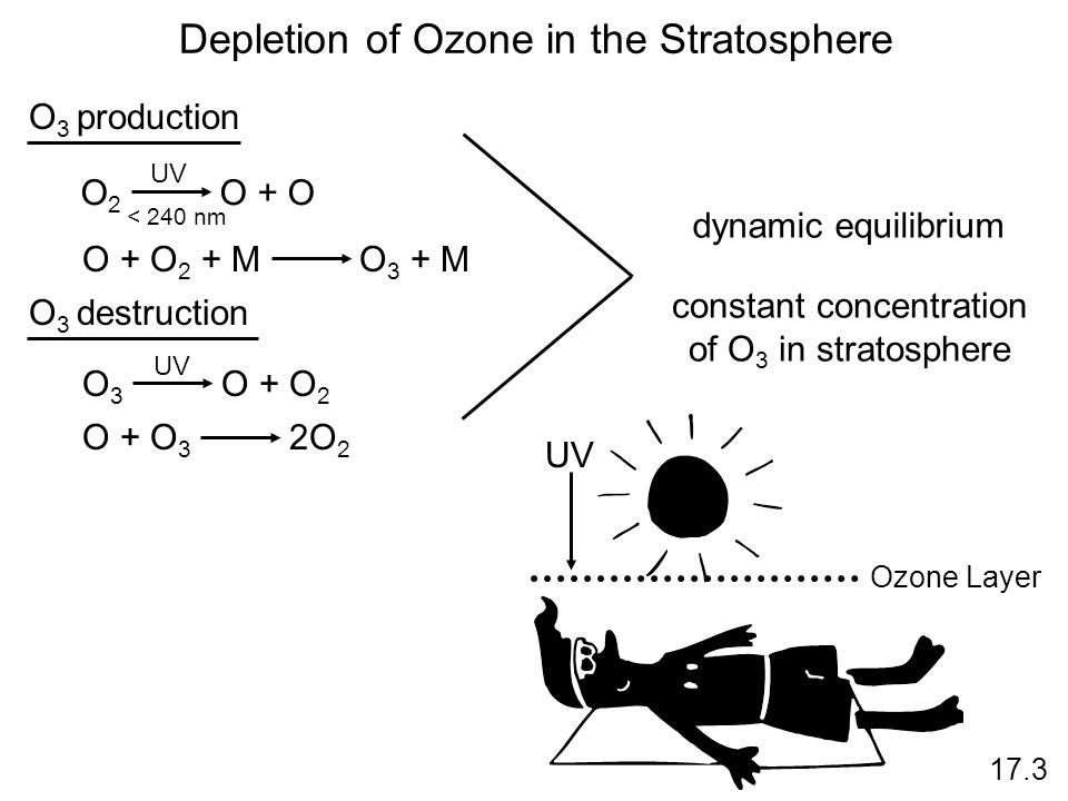 Depletion of Ozone in the Stratosphere 17.3 UV O 2 O + O < 240 nm O + O 2 + M O 3 + M O 3 production O 3 destruction O 3 O + O 2 UV O + O 3 2O 2 dynamic equilibrium constant concentration of O 3 in stratosphere UV Ozone Layer