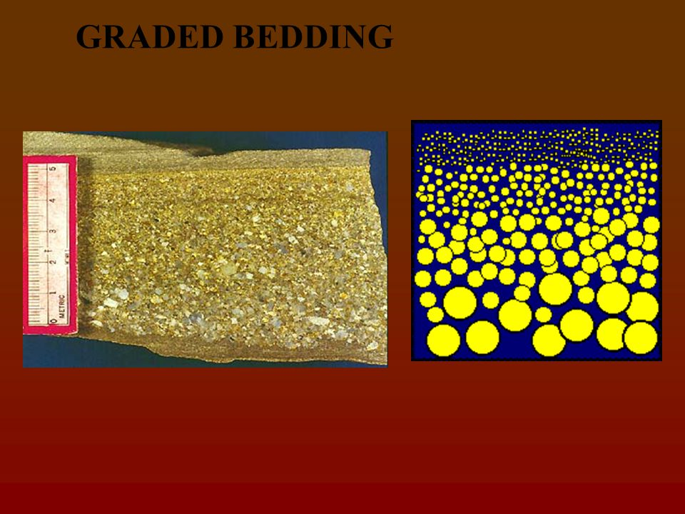 Sedimentary structures Bedding is most imp. Feature of a sed.