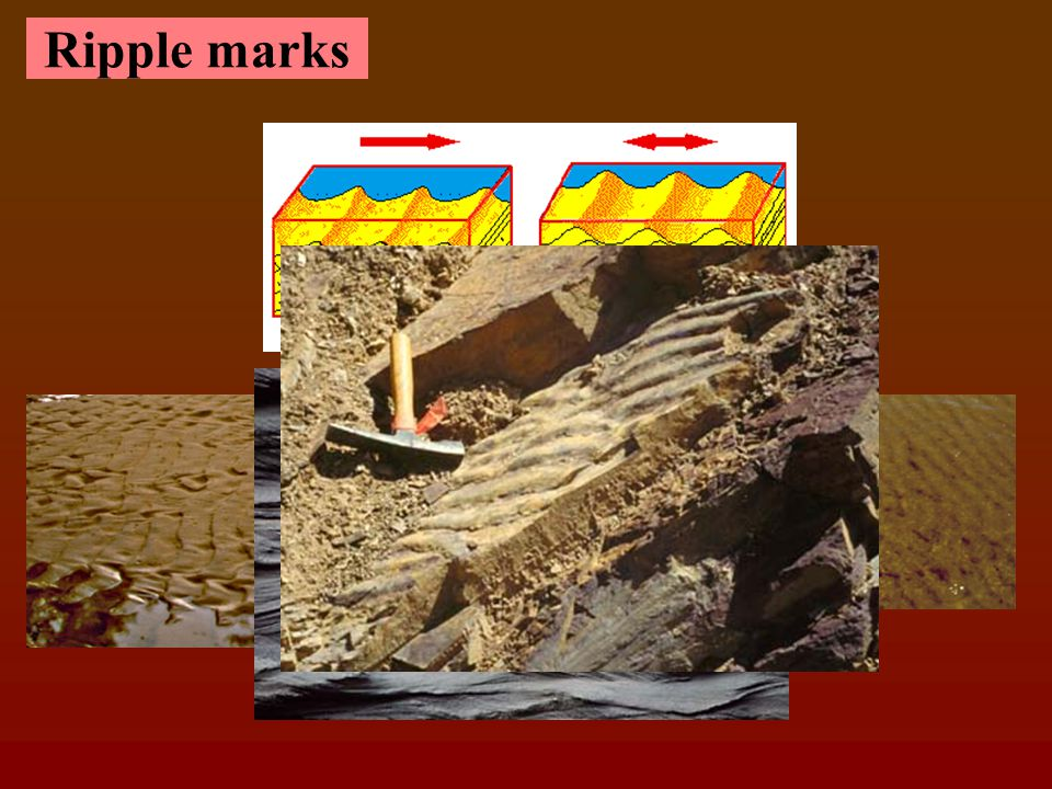 Typical cross stratification in Sand Dunes