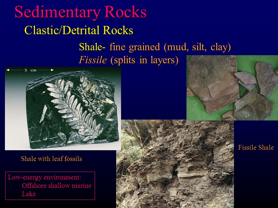 Siltsone/mudstone- fine grained (mud, silt, clay) Massive- breaks in clumps Shale with leaf fossils Sedimentary Rocks Clastic/Detrital Rocks Fissile Shale Low-energy environment: Offshore shallow marine Lake