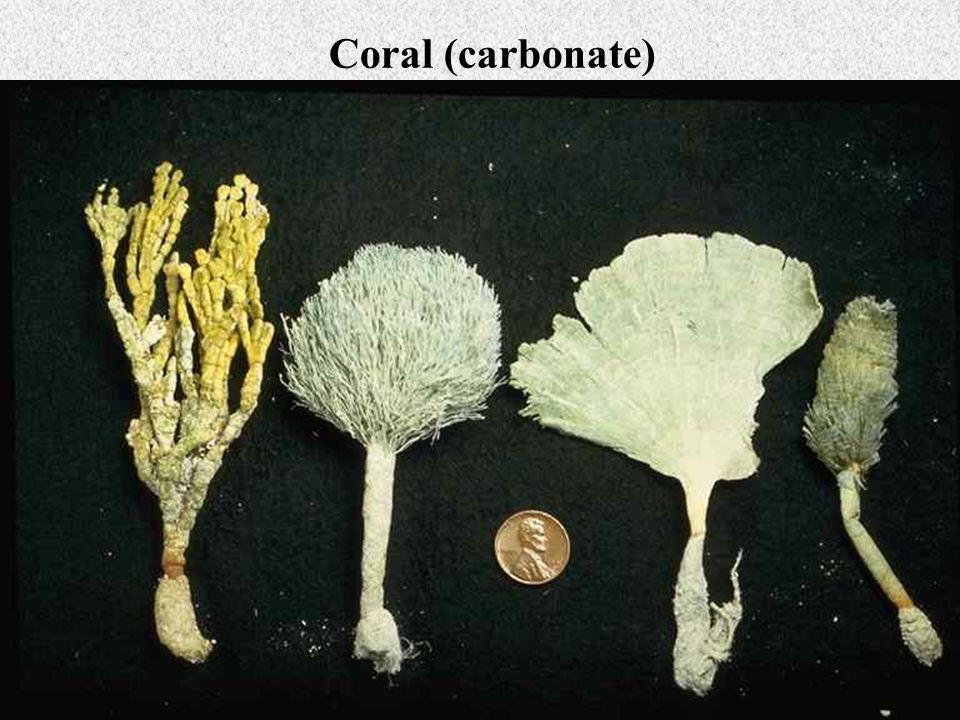 Coral (carbonate)
