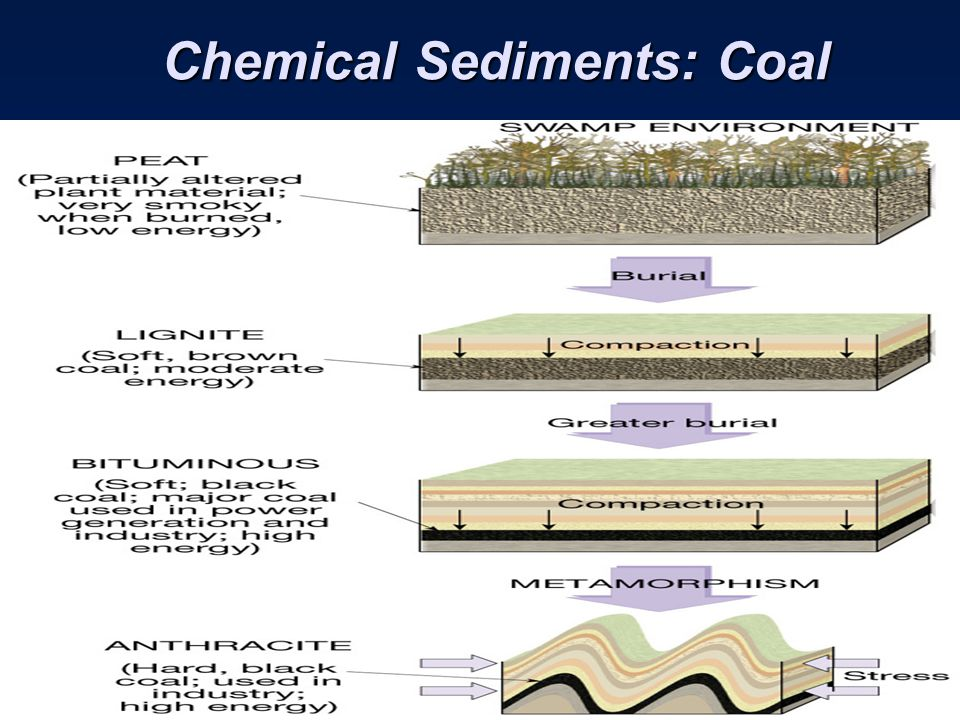 Chemical Sediments: Coal Chemical Sediments: Coal