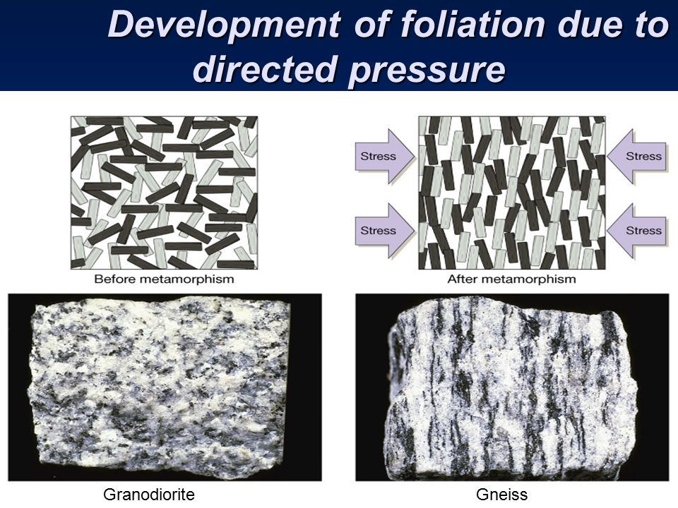 Development of foliation due to directed pressure Development of foliation due to directed pressure GranodioriteGneiss