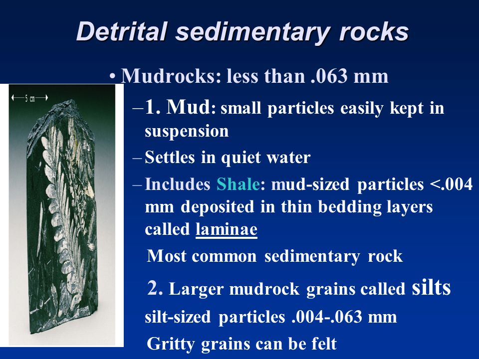 Detrital sedimentary rocks SandstoneSandstone –Made of sand-sized particles larger than.063 mm and less than 2mm –Forms in a variety of environments –Sorting, angularity and composition of grains can be used to interpret the rock's history –Quartz is the predominant mineral (due to its durable nature)