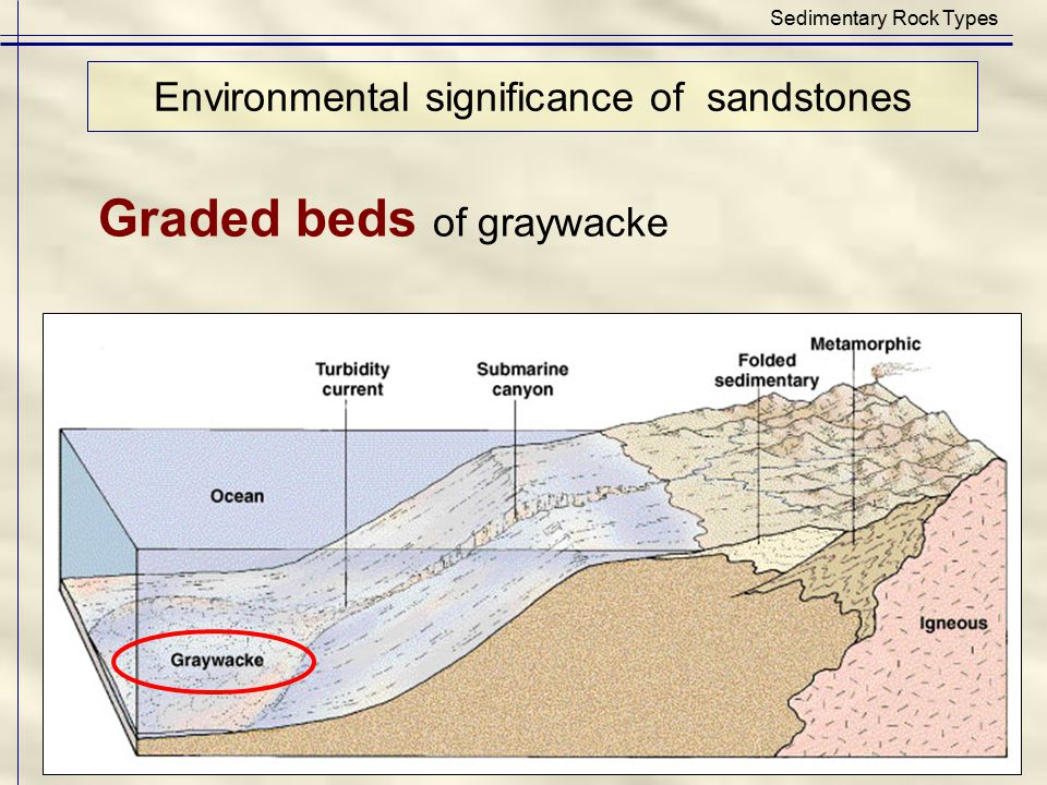 Graded beds of graywacke Environmental significance of sandstones