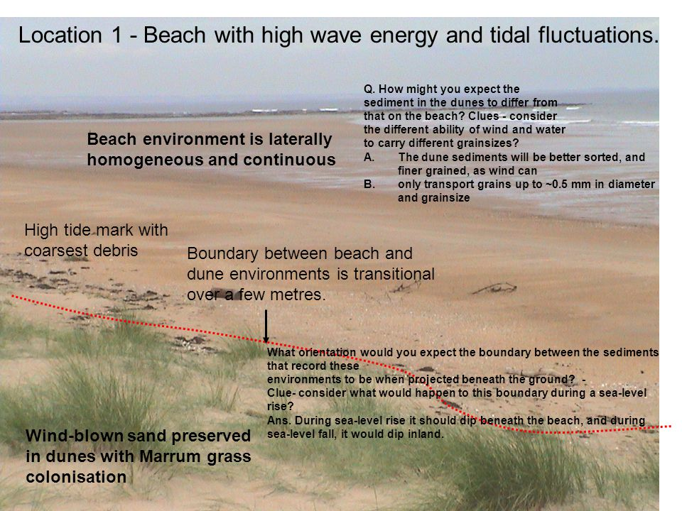 Location 1 - Beach with high wave energy and tidal fluctuations. High tide mark with coarsest debris Wind-blown sand preserved in dunes with Marrum gr