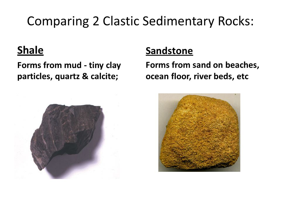 Comparing 2 Clastic Sedimentary Rocks: Shale Forms from mud - tiny clay particles, quartz & calcite; Sandstone Forms from sand on beaches, ocean floor