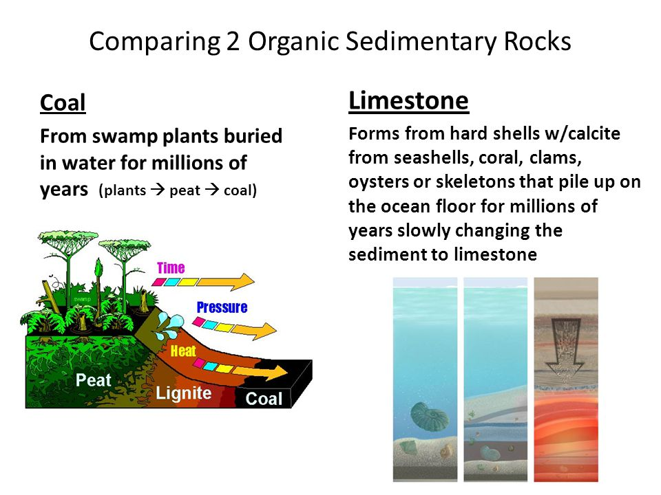 Comparing 2 Organic Sedimentary Rocks Coal From swamp plants buried in water for millions of years (plants  peat  coal) Limestone Forms from hard sh