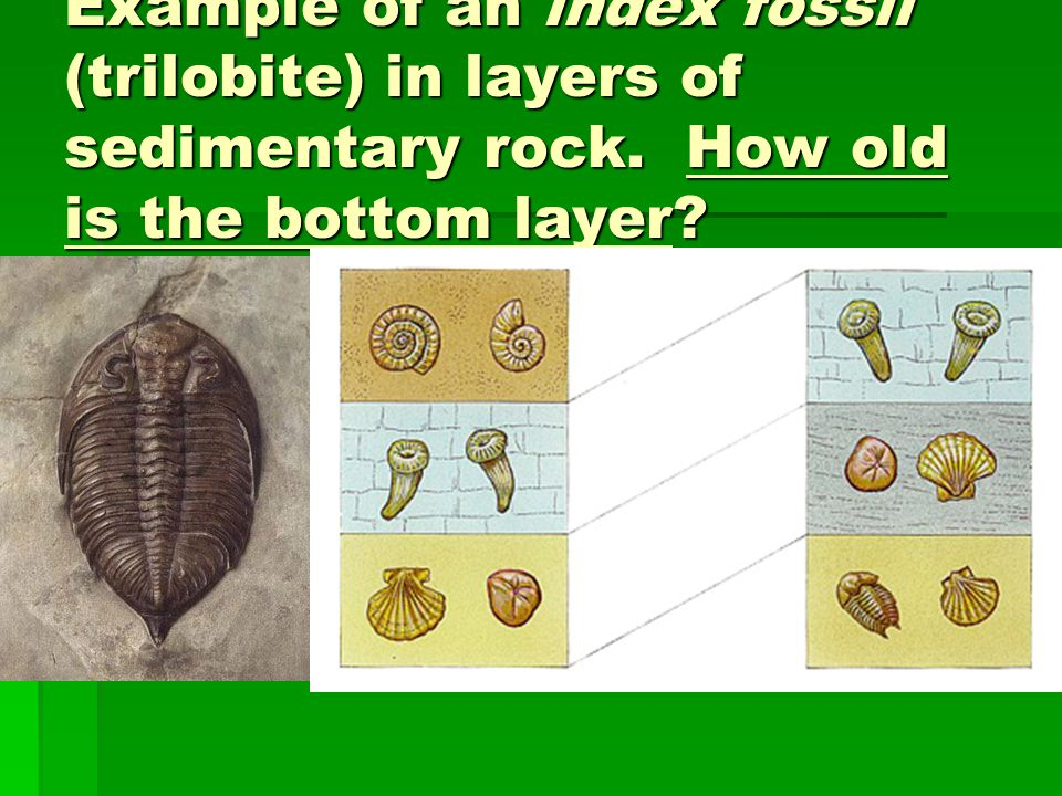 Example of an index fossil (trilobite) in layers of sedimentary rock. How old is the bottom layer?